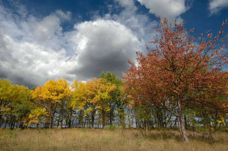 Variety of autumn colours with view of coloured trees and dramatic clouds Stock Photo - 5860334