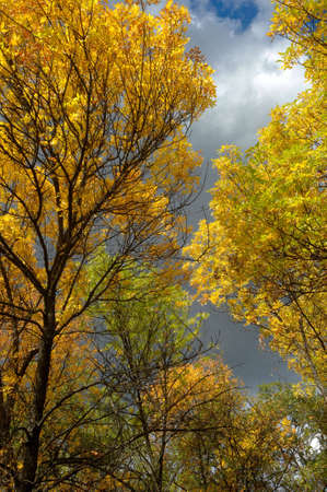 Multi-colored autumn tree photo