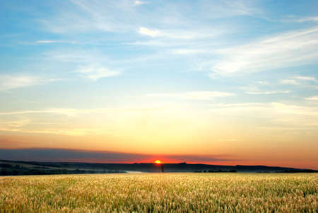 In the wheat field at the night photo