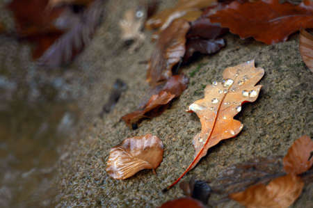 stone cold: Lonely oak leaf