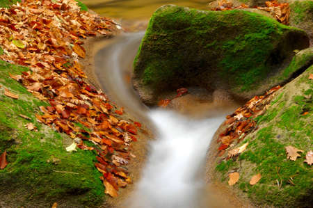 Green moss and yellow leaves on rocks photo