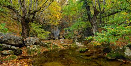 River stream in high mountain in autumn photo