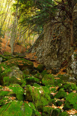 Mossy boulders with leaves in high mountains