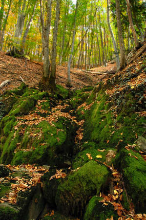 Mossy boulders with leaves in hight mountains Stock Photo