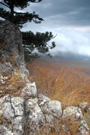 Mysterious rock with a view of foggy forest