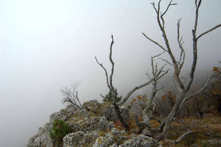 Mysterious branches of dead tree with a view of coming fog Stock Photo