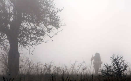 Traveler silhouette in foggy forest Stock Photo