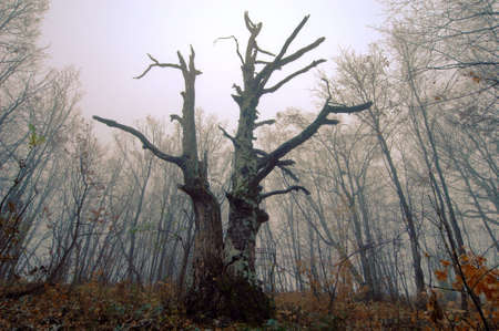 Mysterious forest with a view of coming fog photo