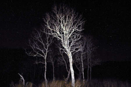 Grunge view of bushes on a black background with stars in sky