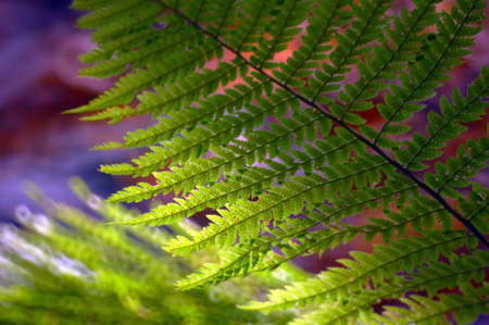 Fern on a dark background with sunlight Stock Photo