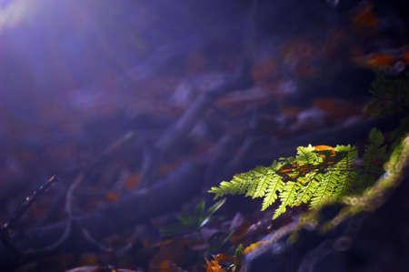 animal limb: Fern on a dark background with sunlight Stock Photo