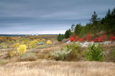 Colorful autumn in pine forest Stock Photo - 6267635