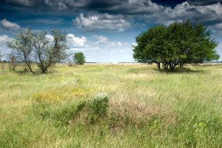 Summer meadow with view of clouds and green trees Stock Photo