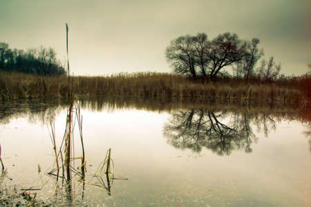 Fairy-tale tree mirroring in a water