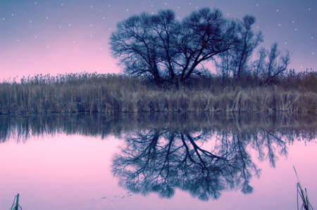 reflect: Fairy-tale tree mirroring in a water