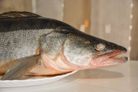 pikeperch: The head of zander on a plate close-up. Stock Photo