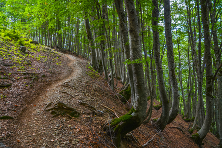 Path up through the woods on a mountain slope.