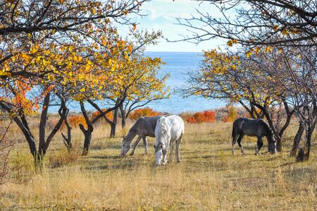 issyk kul: Three horses in the garden by the lake.