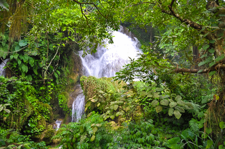 dense forest: Flow of falling water in a dense forest.