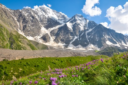High mountain with glacier, below the flower meadow.