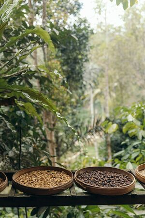 different type of roasting coffee beans luwak on a coffee plantation in Asia