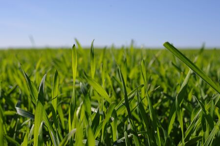 Green grass Stock Photo - 8791957