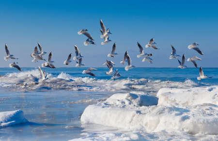 the seagulls: Seagulls over the sea Stock Photo