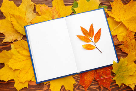 Notebook with clean sheets on the background of bright autumn leaves. Autumn mood concept. Flat lay, top view, copy space
