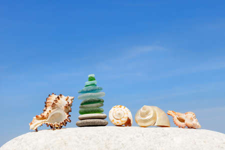 The design of exotic shells on the background of the summer, blue sky. The concept of a beach holiday by the sea. copy space