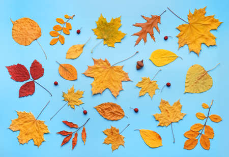 Pattern of red and yellow autumn leaves on light blue background. Flat lay, top view