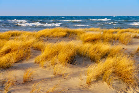 Sunny autumn day on the Baltic sea. Sandy beach, dunes and yellow grass Imagens