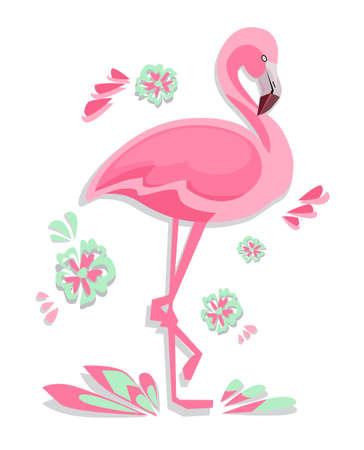 Flamingo Vector Illustration Çizim