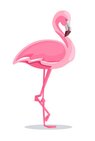 Flamingo Vector Illustration Иллюстрация