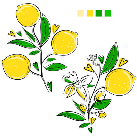 Lemons with leaves isolated on a white background sketch. Hand drawn citrus vector illustration. Yellow picture. Çizim