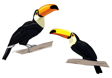 Toucan isolated on a white background. Exotic tropical bird.