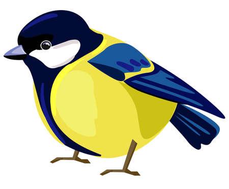 Beautiful titmouse Bird isolated on white background. illustration. Tomtit, Sparrow, Bullfinch.