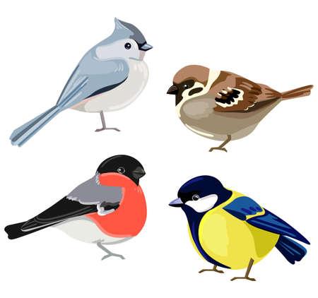 Birds set illustration. European crested tit, Titmouse, Bullfinch, Sparrow.