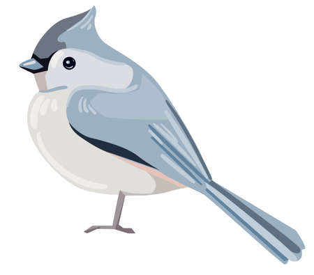 European crested tit bird vector