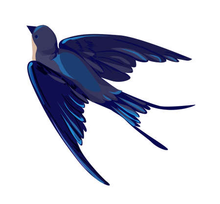 Swallow vector, vector illustration isolated bird, bird flying, bird silhouette, bird vector. 向量圖像