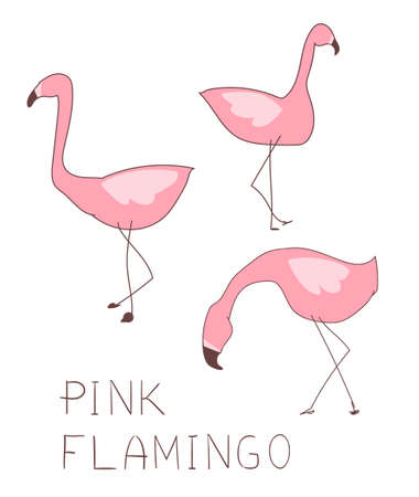 Flamingo set illustration, Summer Design, children print on t-shirt