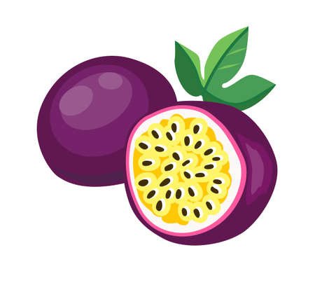 Vector Hand Drawn passion fruit isolated on a white background. Vector Fruit Illustration.