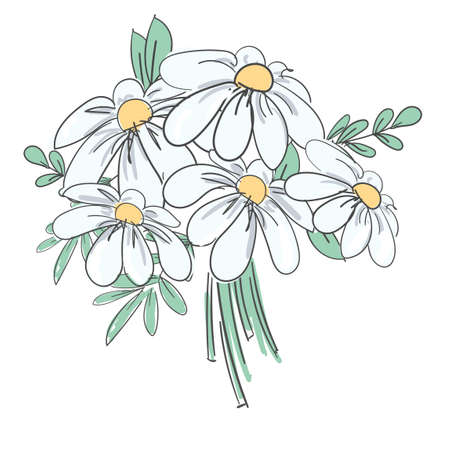 Hand drawn bouquet camomile flowers Daisies vector