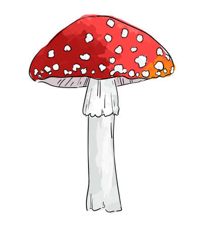 Hand drawn amanita mushroom isolated on white background vector illustration.