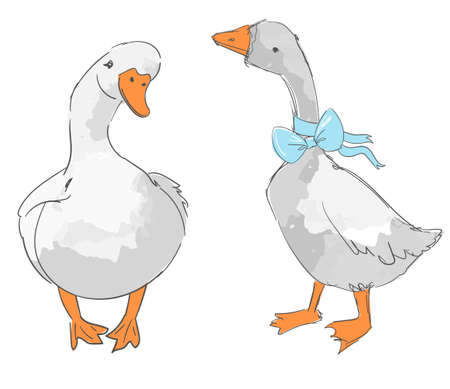 Hand drawn cute two gooses isolated on white background vector illustration Illusztráció