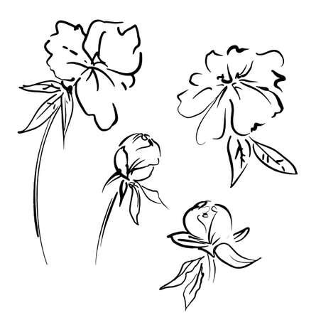 Hand Drawn Flowers vector illustration, Ink Bouquet of peonies Vector Illustration