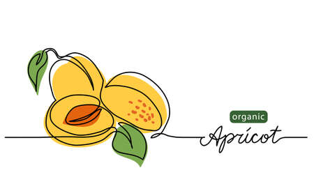 Apricot vector illustration. One line drawing art illustration with lettering organic apricot. Vektorgrafik