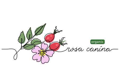 Wild rose, briar background. Dog rose branch vector illustration. Rosa canina drawing. One continuous line art with lettering organic wild rose Vektorgrafik