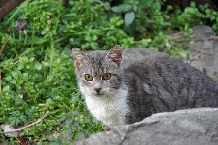 catling: Cat