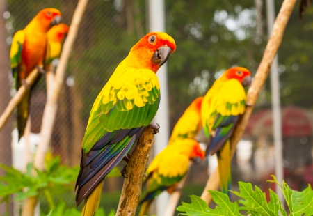 parrots are seatting on the branch  Stock Photo