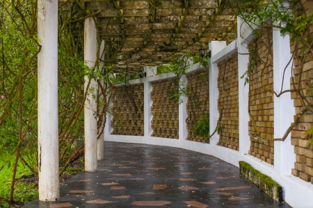 ivy wall: Covered walkway in the park